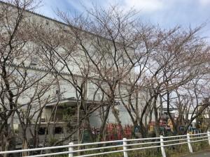 2017-04-02桜